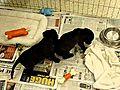 PuppiesAvailableforAdoptionPlaying