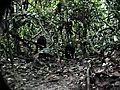 MonkeyDiscoversHiddenCamera