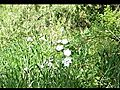 FlowersintheForestWind