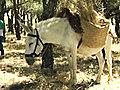 DonkeysGPSWildfires