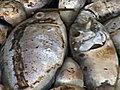 Twelvemilliondeadfish