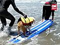 Dogssurfforcharity