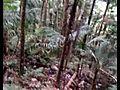 QIKStreamingvideorightfromyourphone