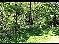 MountainBikingStainburnForest1
