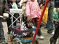 SausagedogsstealtheshowinPolishparade