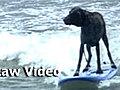 SurfingDogsHang20