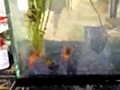 NewFish