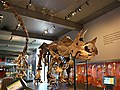 Dinosaurscomealiveinnewexhibit