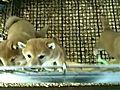 OMGPuppies