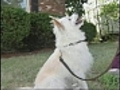 CanyoudoitNamethatdogsbreed
