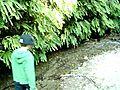 FernCanyonCALIFORNIARedwoodNationalPark