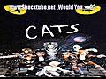 CatsauditorycommunicationMemory